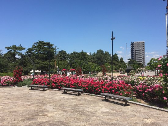 Hamadera Park: 浜寺公園薔薇園