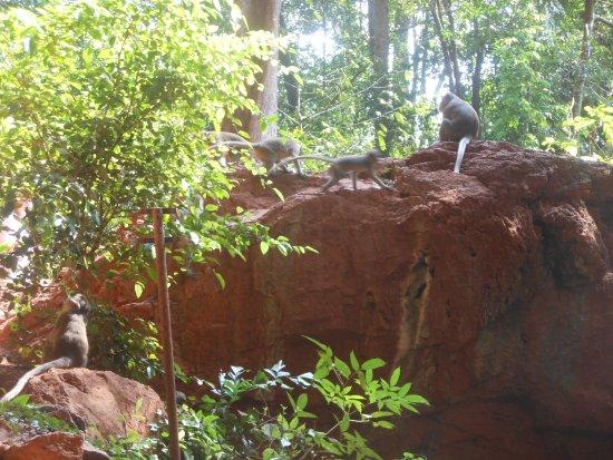 Takua Thung District, Thailand: Phang-Nga, il Suwannakuha Temple o monkey cave