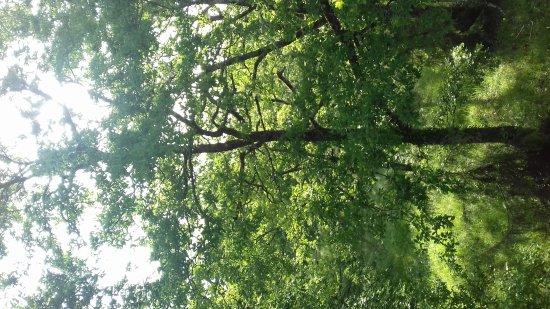 Ecologites - Le Bois de Faral : 20170521_083121_large.jpg