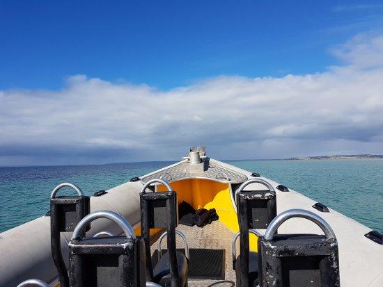 Kangaroo Island Marine Adventures: 20170427_112621_large.jpg