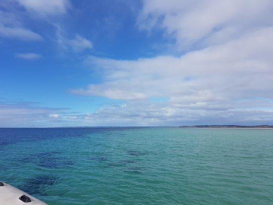 Kangaroo Island Marine Adventures: 20170427_103746_large.jpg