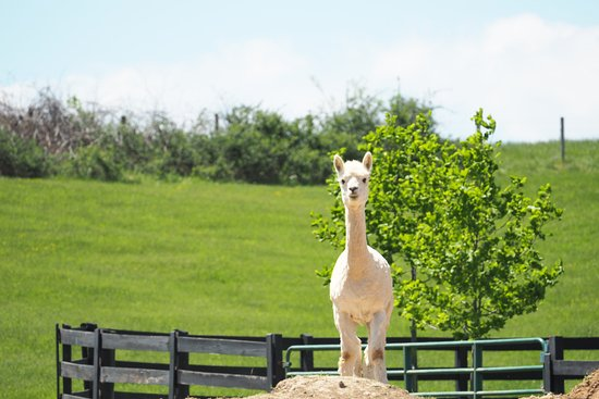 Harrisonburg, VA: Entertaining animals - full of personality