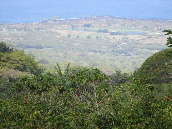Kealakekua, Havai: View from Kona Joe Coffee Farm