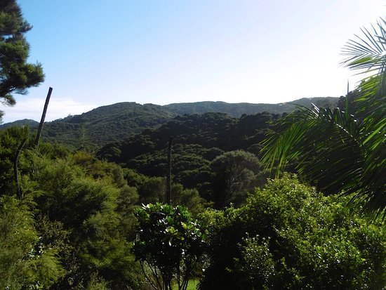 View of the rain forest from Koru Retreat, Russell Healing Massage in Russell, Bay of Isles, New
