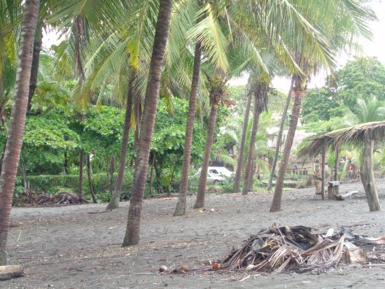 Playa Hermosa: Portion of Playa, Shade Under The Palms