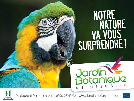 Jardin Botanique de Deshaies : Notre mascotte : Roger