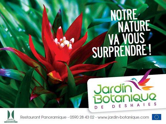 Jardin botanique de deshaies guadeloupe rt kel sek - Jardin botanique guadeloupe basse terre ...