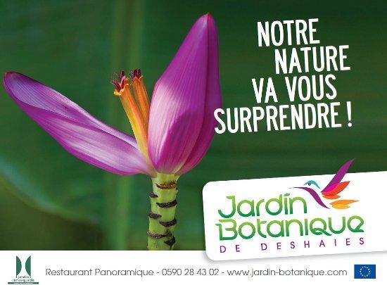 Deshaies, Guadalupe: la fleur de bananier illustre parfaitement la biodiversité du monde caribéen