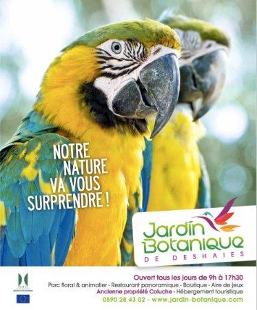 Deshaies, Guadeloupe: Bec Blanc et Jazz, retrouvez notre petit coupe au village des perroquets