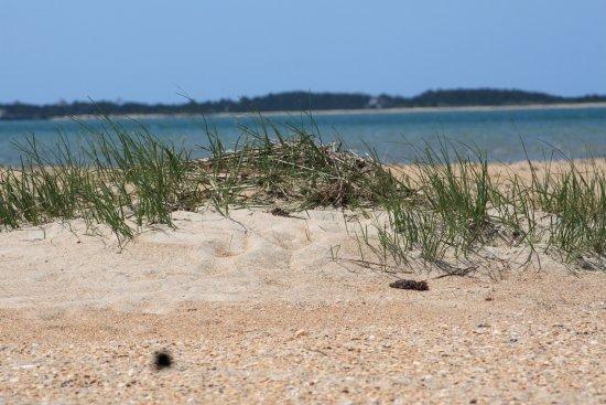 Beaufort, Carolina del Nord: Lookout Cape