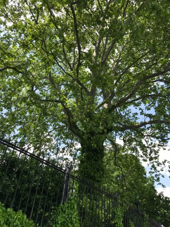 Gracie Mansion: Magnificent trees