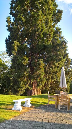 Stourport on Severn, UK: Just one of the many huge trees in the grounds