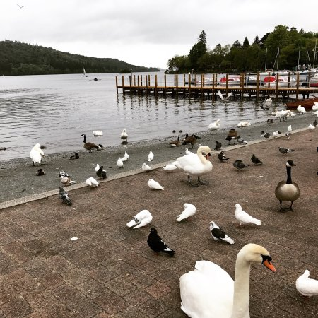 The Coppice Guest House: Windermere