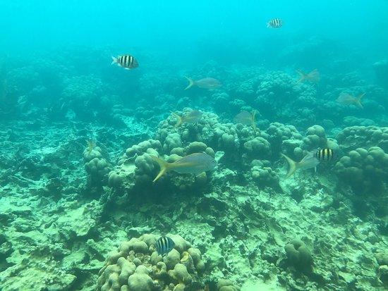 Le Marin, Martinik: photo1.jpg
