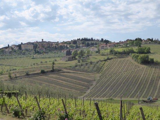 Radda in Chianti, Italy: Colle Bereto vineyards