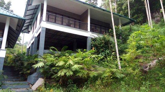 Wayanad Coffee Trail Resort: IMG-20170527-WA0079_large.jpg