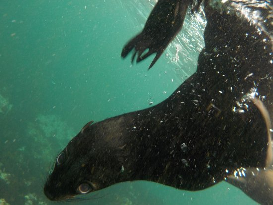 Hout Bay, Südafrika: photo3.jpg