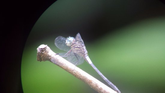 Costa Rica Jade Tours: insects