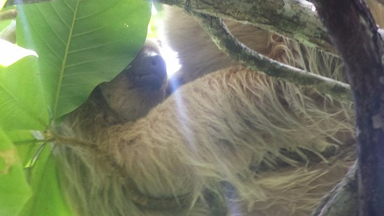 Costa Rica Jade Tours: Mother and baby sloth