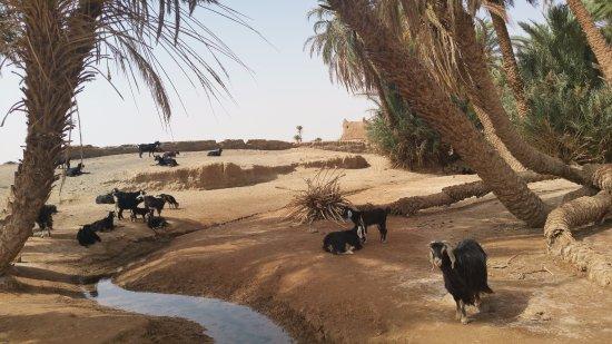 It's 4 You Tours : Une source dans le désert, des chèvres, un berger, quelque part à l'ombre