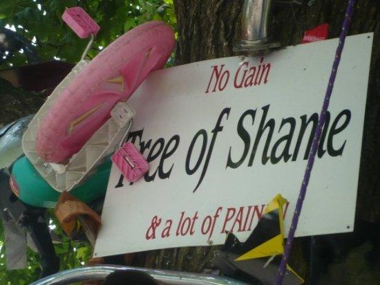 Robbinsville, NC: Tree of Shame