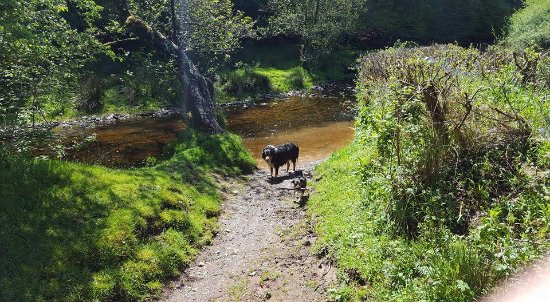 West Hollowcombe Self Catering Cottages : river on dog walk at bottom of Hawkrige hill