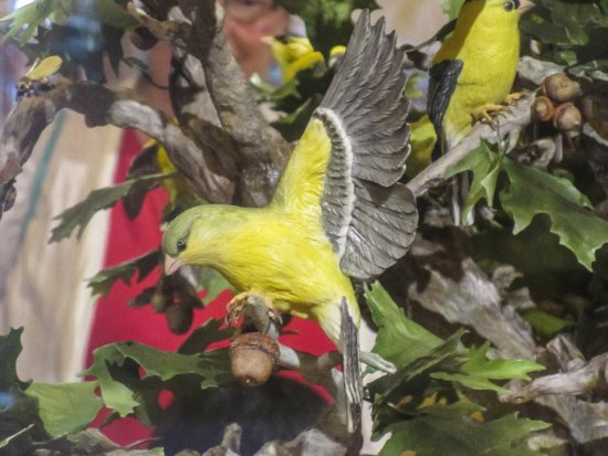 Trenton, NJ: Ceramic artwork of the state bird, tree, bug and flower.