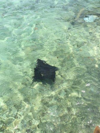 Tobacco Caye, Belize: photo5.jpg