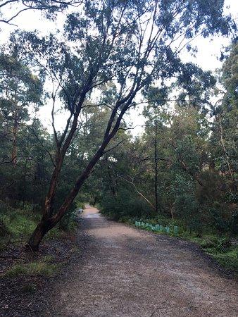 Mount Waverley, Australia: Damper Creek Reserve