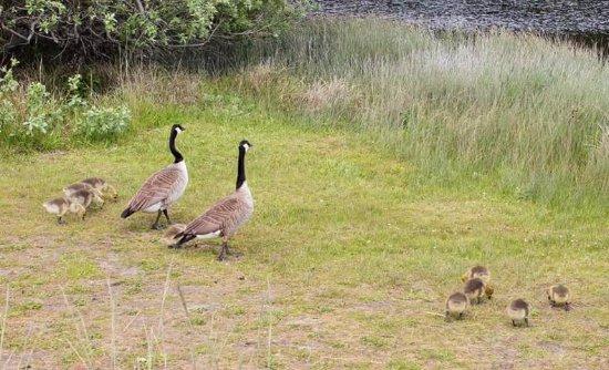 Oak Harbor, WA: Fun for families