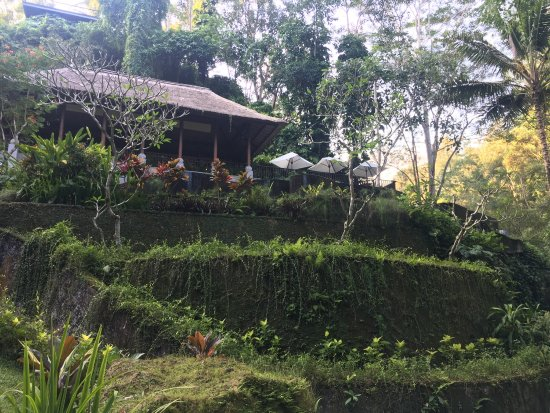 Maya Ubud Resort & Spa: photo1.jpg