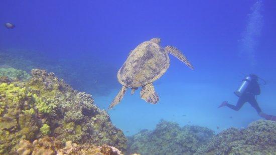 Kaunakakai, HI: Turtle cleaning station