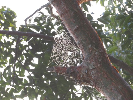 Royal Palm Visitor Center: dewy spiderweb