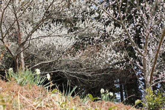 Ieyama Plum Garden