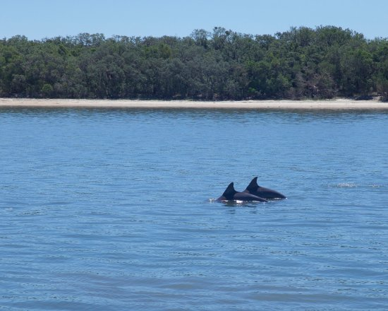 Fernandina Beach, FL: dolphins cavorting just off the port side
