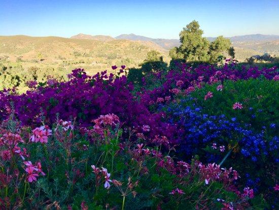 Ramona, CA: The flowers!
