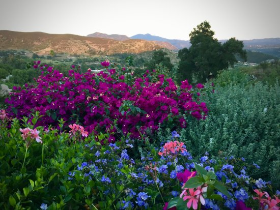 Ramona, CA: Another shot
