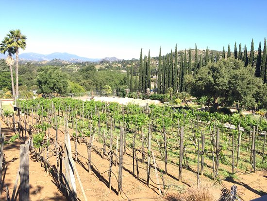 Ramona, CA: Cute vines