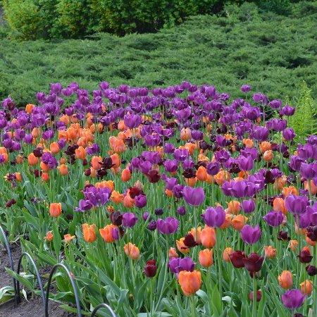 Ottawa, Canada: Canadian Tulip Festival