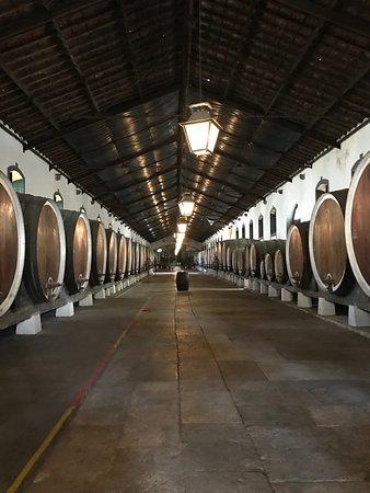 Colares, Portekiz: Cellar