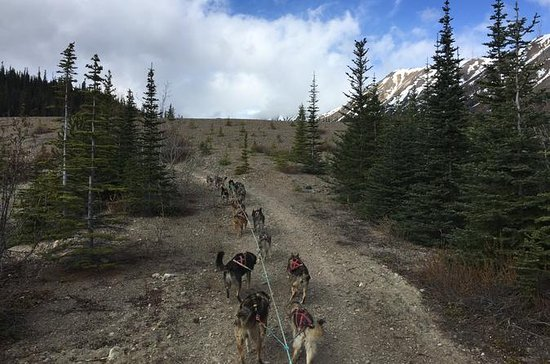 Sled Dog Adventure and Pan for Gold in the Yukon