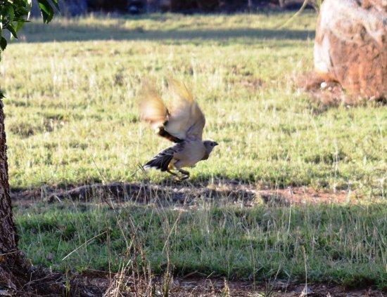 Mount Surprise, Australien: Abundant bird life