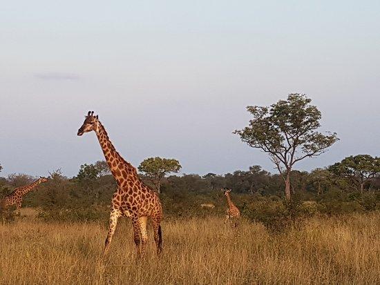 Umkumbe Safari Lodge: 20170420_170739_large.jpg