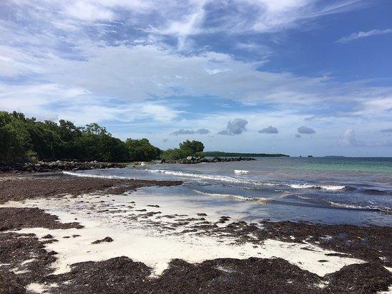 Ceiba, Puerto Rico: photo3.jpg