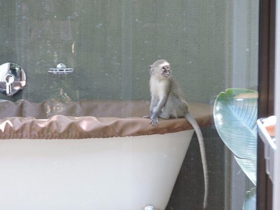 Falaza Game Park & Spa: Visitor coming to take a bath?