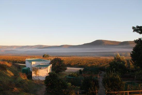 McGregor, Sudáfrica: Morgennebel über den Weinreben