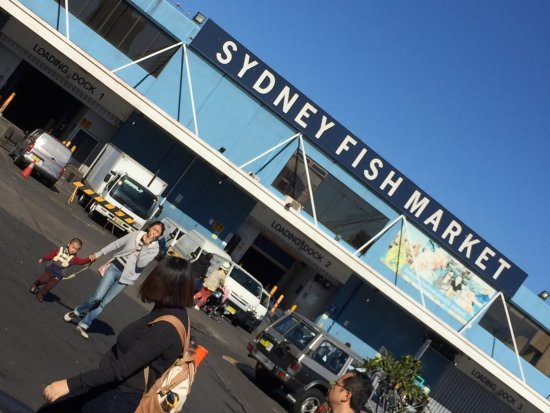 Picture of sydney fish market sydney for Wholesale fish market near me