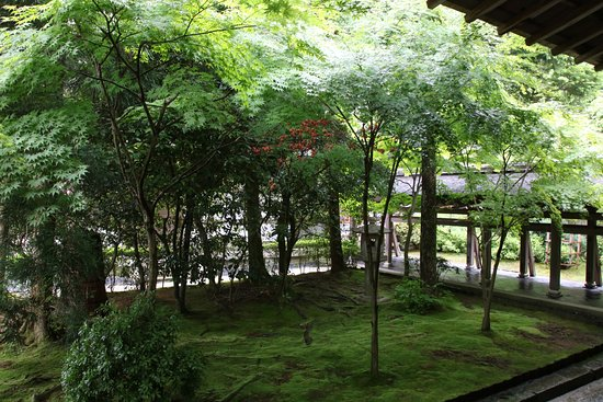 ry an ji temple jardin humide picture of ryoanji temple kyoto tripadvisor. Black Bedroom Furniture Sets. Home Design Ideas
