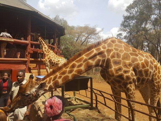African Fund for Endangered Wildlife (Kenya) Ltd. - Giraffe Centre: 20170415_141851_large.jpg
