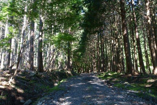 Mimasaka, Japón: 最初はこんな林道です